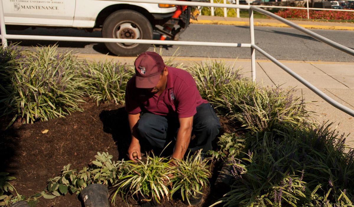 CUA staff member planting garden
